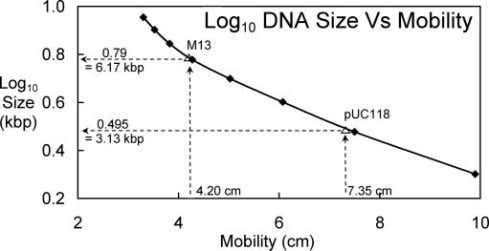 32 F IG . 3. Log 1 0 DNA fragment size is plotted against mobility for
