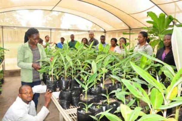 IITA to hold workshop on engaging youth for agricultural transformation I ITA, with the Support for