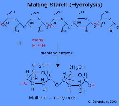 partial hydrolysis of starch. • The two glucose units are joined by an acetal oxygen bridge