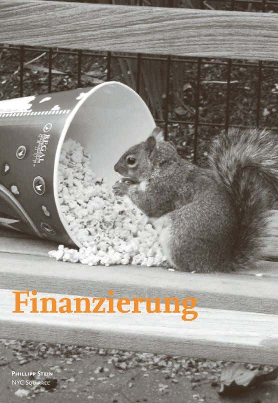 Finanzierung Phillipp Stein NYC Squirrel