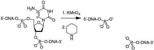 V ard.edu Received August 14, 2002 ABSTRACT 5-Amino-2 -deoxyuridine 5 -triphosphate, an analogue