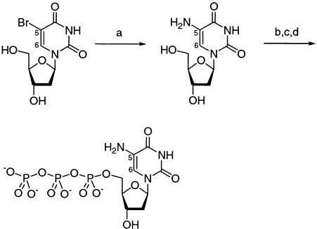 1). We found that the Scheme 1. Synthesis of 5-Amino-dUTP a a Reagents and conditions: (a)
