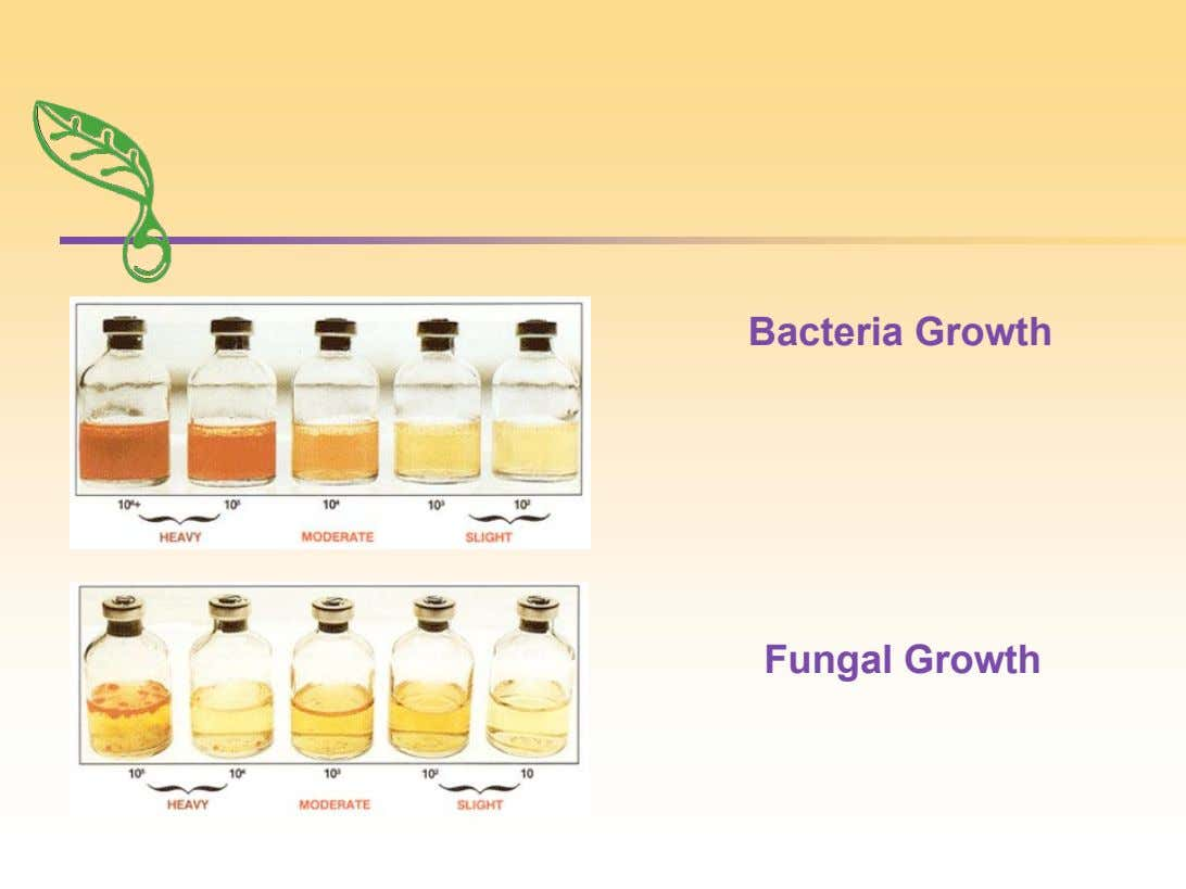 Bacteria Growth Fungal Growth