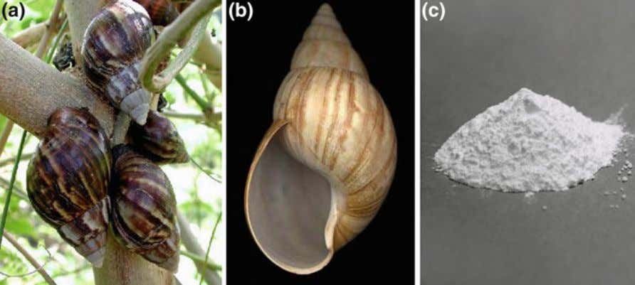 Naturally Derived Biomaterials and Its Processing 27 Fig. 3 a Achatina fulica snail, b its shell,