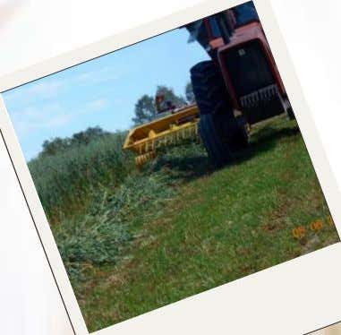 Summer on the Farm by Cindy Mesimer Golden wheat swaying in the wind, mowers layin'