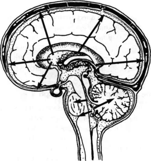 "the brain matter Hormonal Function in CSF The Fluid Medium: CSF The ""parietal eye,"" the pineal"