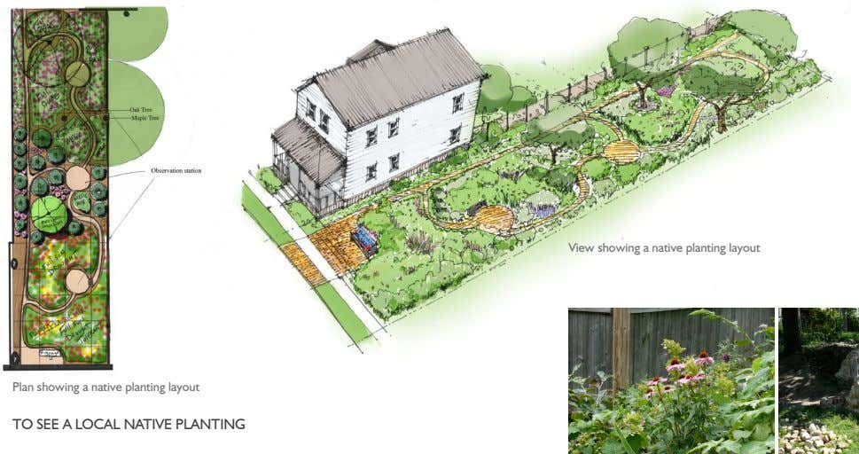 View showing a native planting layout Plan showing a native planting layout TO SEE A