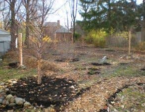 once trees and plants are established. FOREST RAINGARDEN Ashurst Stormwater Management Demonstration Project,