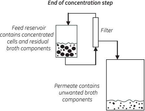 End of concentration step Feed reservoir contains concentrated cells and residual broth components Filter Permeate