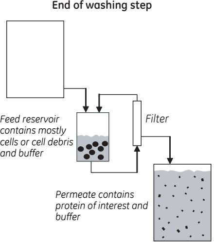 End of washing step Feed reservoir contains mostly cells or cell debris and buffer Filter