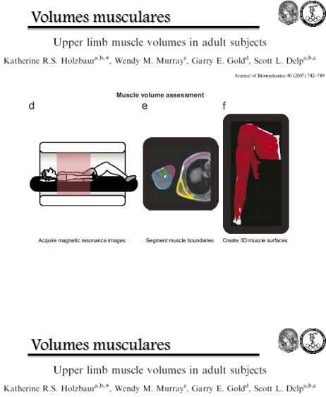Volumes musculares Volumes musculares
