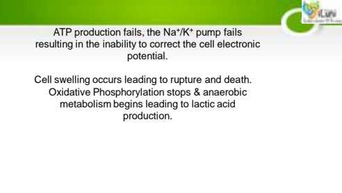 ATP production fails, the Na + /K + pump fails resulting in the inability to