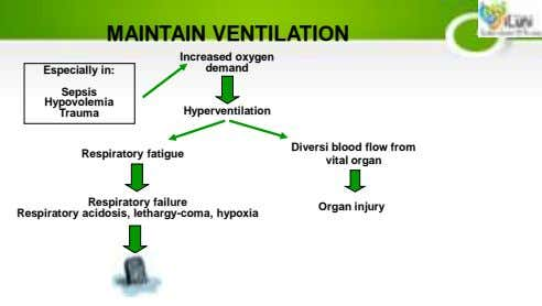 MAINTAIN VENTILATION Increased oxygen demand Especially in: Sepsis Hypovolemia Hyperventilation Trauma Respiratory