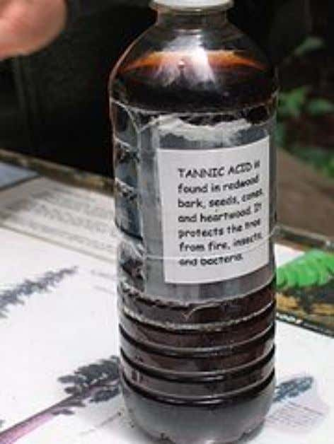 are actually from Acacia dealbata (Silver Wattle). Tannin A bottle of tannic acid . The bark
