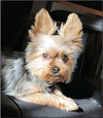 male Yorkie dog owned by Amy Tansey, won third place. At right, from top, honorable mentions