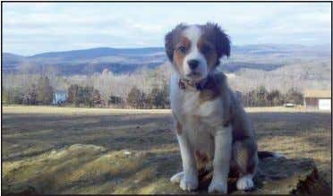 domestic cat owned by Jane R. van Laer of High Falls. Ryder, a 3-month-old Collie/King Charles