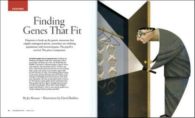 conservationmagazine.org http://conservationmagazine.org/2011/09/finding-genes-that-fit/ Finding Genes That Fit September 1, 2011Wildlife2 Comment Desperate to break up the genetic