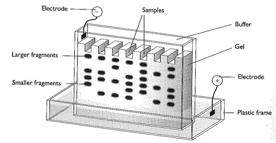 CHM1313 DNA fingerprinting Separation Techniques used in Analytical Chemistry This is a 'high - profile' analytical