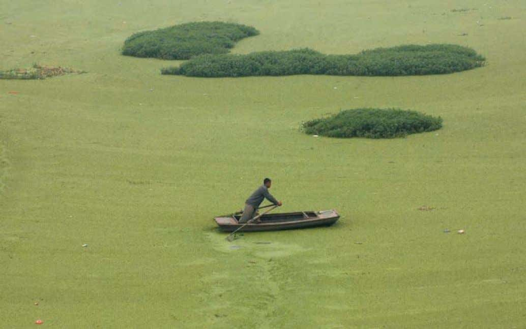 Severe eutrophication has covered this lake near the Chinese city of Haozhou with algae