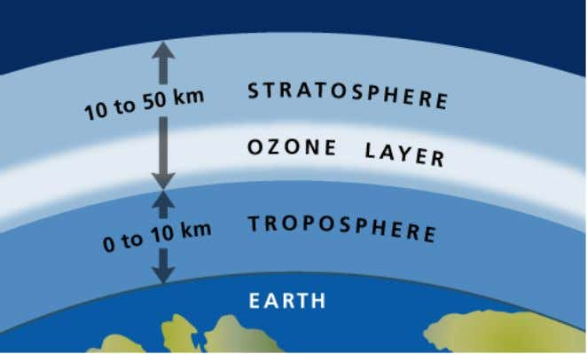 a number of structures in plants. • Stratospheric ozone acts as a protective shield against radiation
