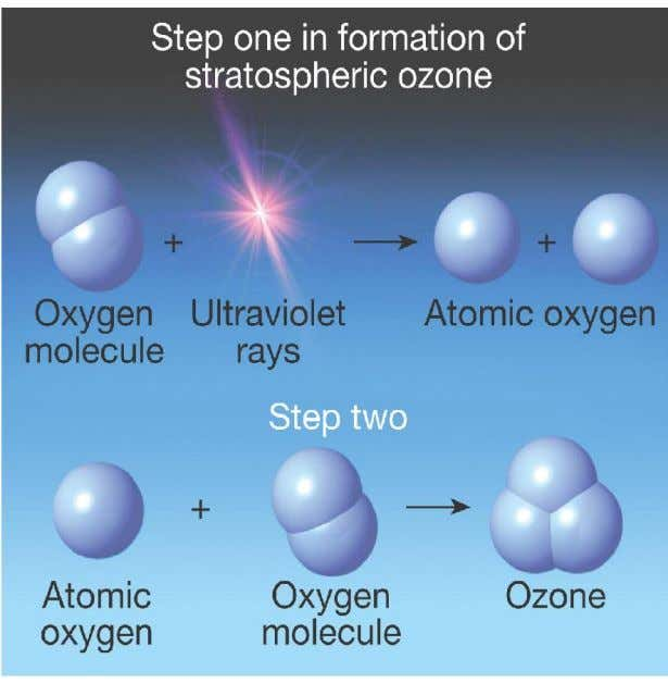 free oxygen atoms react with oxygen molecule to form ozone • Ozone is broken down into