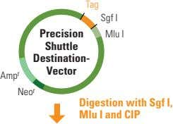 Tag Sgf I Precision Mlu I Shuttle Destination- Vector Amp r Neo r Digestion with