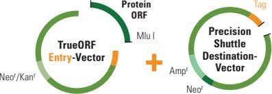 Protein Tag ORF Precision Mlu I TrueORF Shuttle Entry-Vector Destination- Vector Amp r Neo r