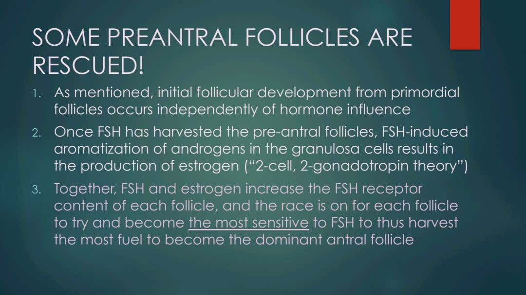 SOME PREANTRAL FOLLICLES ARE RESCUED! 1.  As mentioned, initial follicular development from primordial follicles
