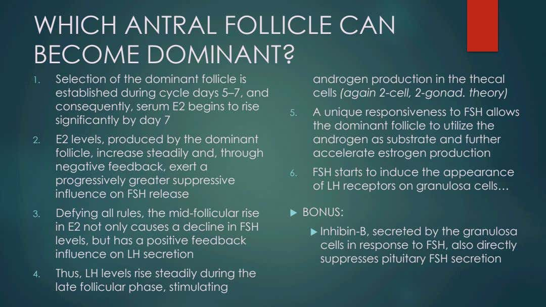 WHICH ANTRAL FOLLICLE CAN BECOME DOMINANT? 1.  Selection of the dominant follicle is established during