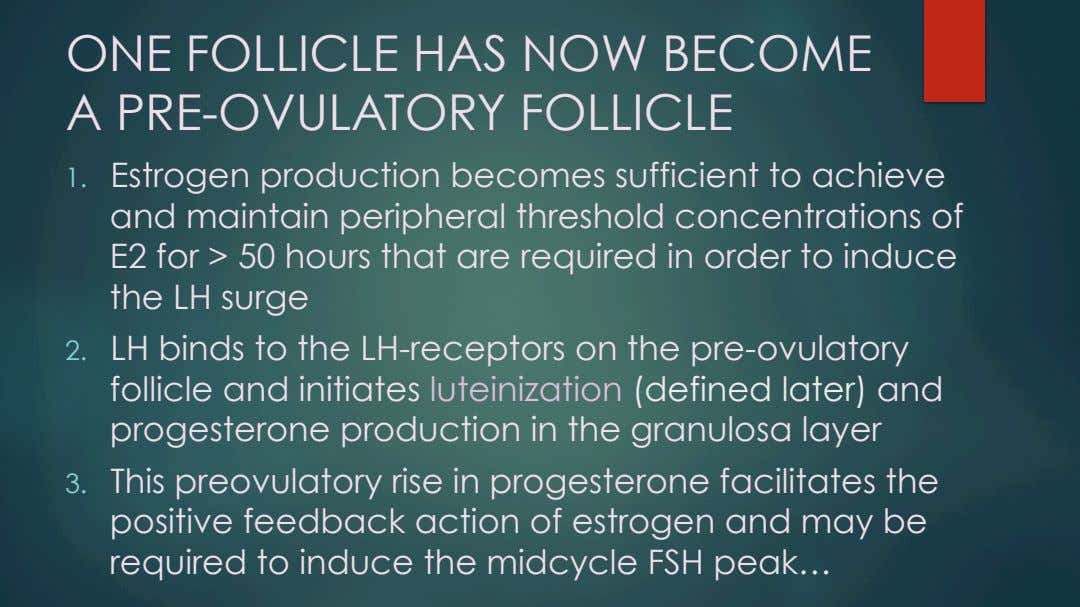 ONE FOLLICLE HAS NOW BECOME A PRE-OVULATORY FOLLICLE 1.  Estrogen production becomes sufficient to achieve
