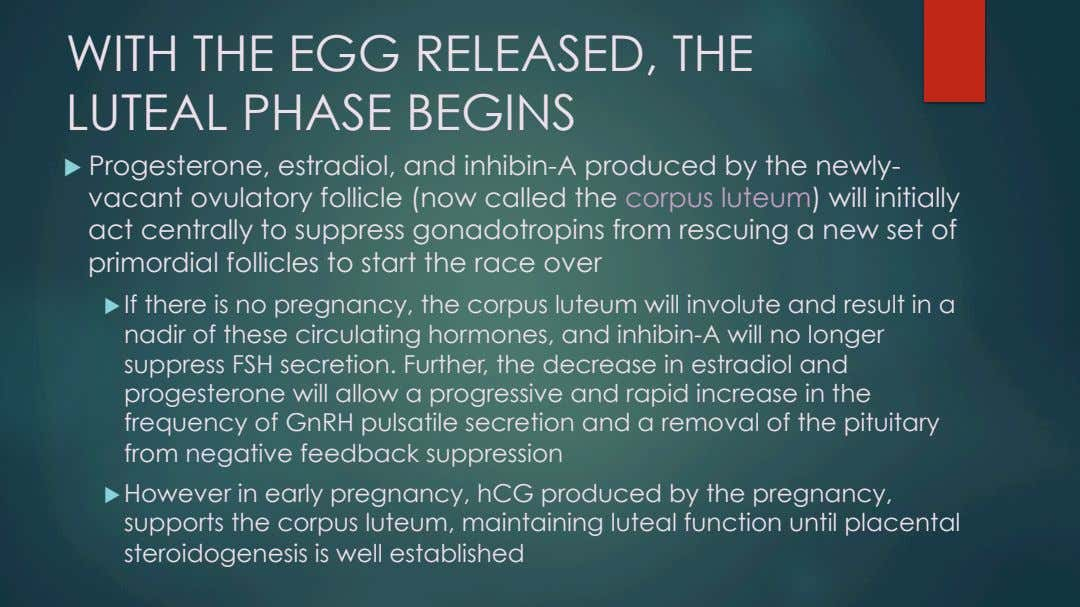 WITH THE EGG RELEASED, THE LUTEAL PHASE BEGINS u   Progesterone, estradiol, and inhibin-A produced