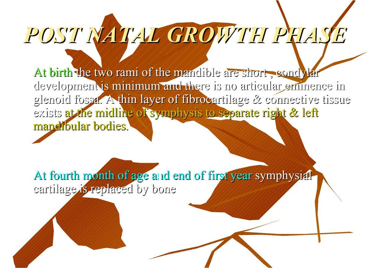 POST NATAL GROWTH PHASE POST NATAL GROWTH PHASE At At birth birth the two rami of