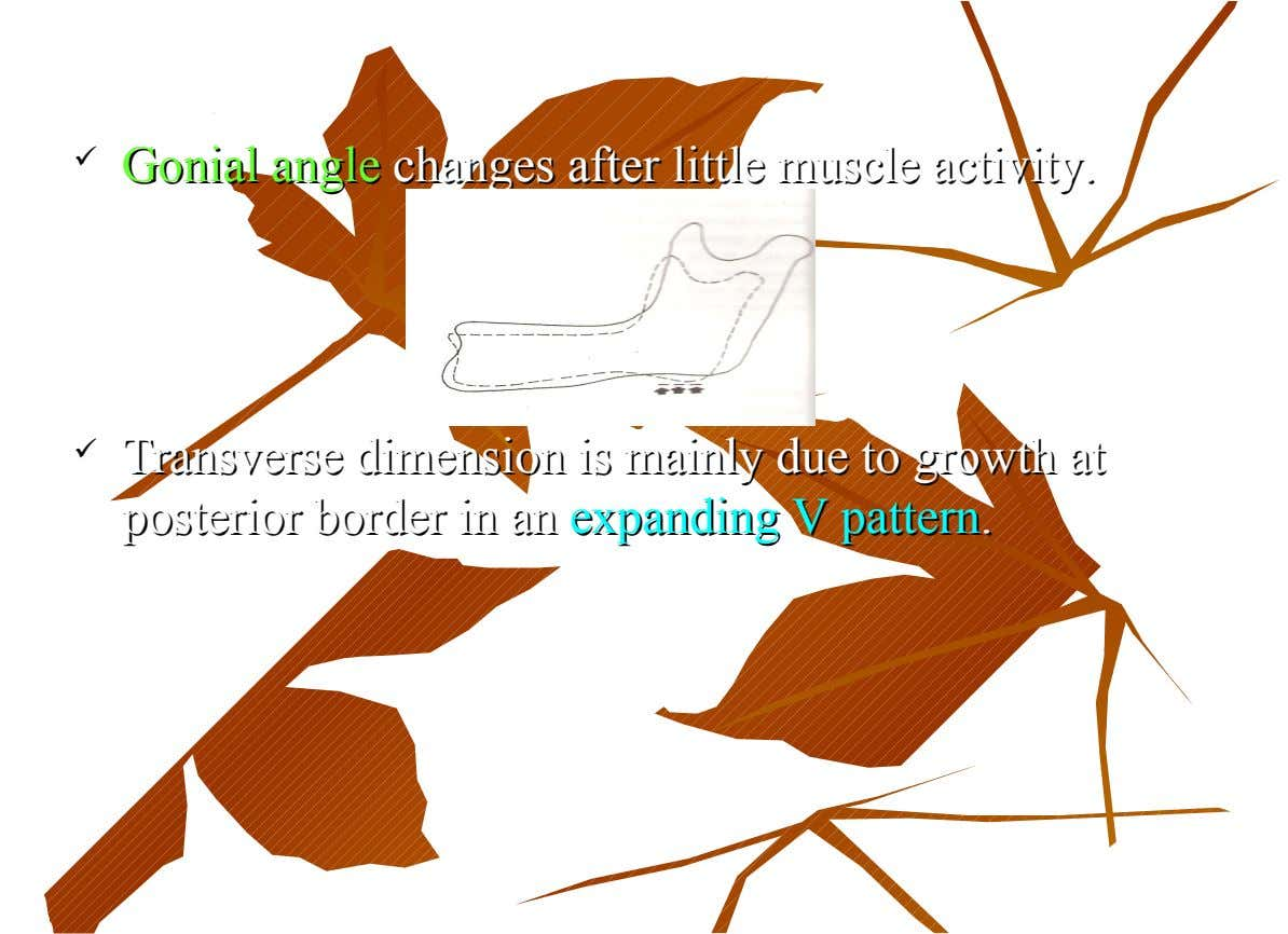  Gonial Gonial angle angle changes after little muscle activity. changes after little muscle activity. 