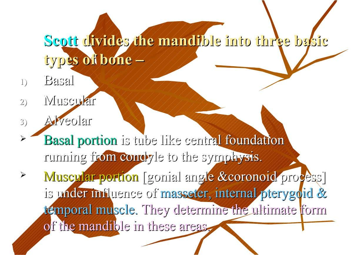 Scott Scott divides divides the the mandible mandible into into three three basic basic types of