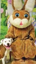 pictured here with the Easter Bunny, is an American Bulldog mix who was born 6/29/14. He