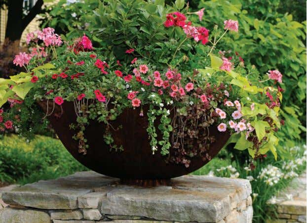 Distinctive & Delightful, Plants for Garden & Home Whatever your dreams or décor, American Plant offers