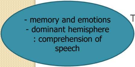 - memory and emotions - dominant hemisphere : comprehension of speech