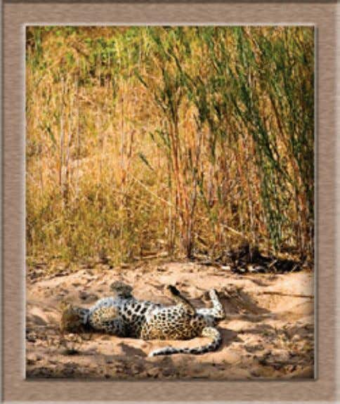 bush camps contact John Turner @ johnturn@iafrica.com Photo: Dominic Barnhardt kruger park times - 4- kruger