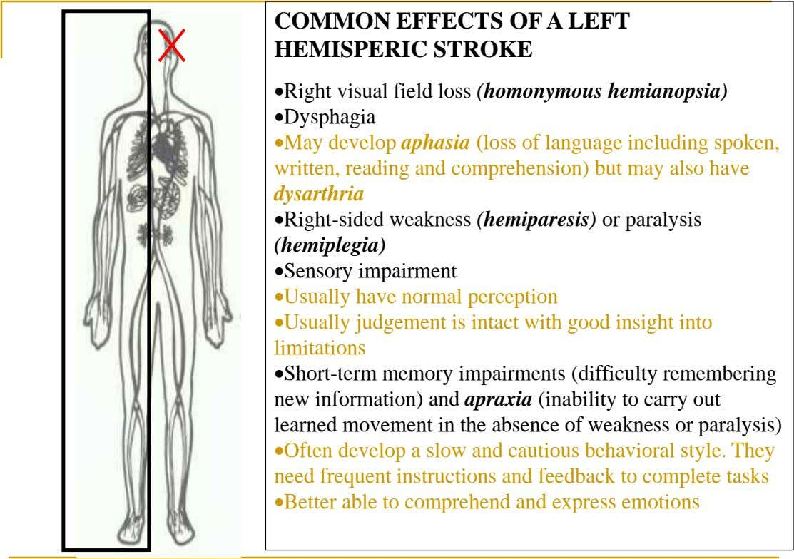 COMMON EFFECTS OF A LEFT HEMISPERIC STROKE Right visual field loss (homonymous hemianopsia) Dysphagia May develop