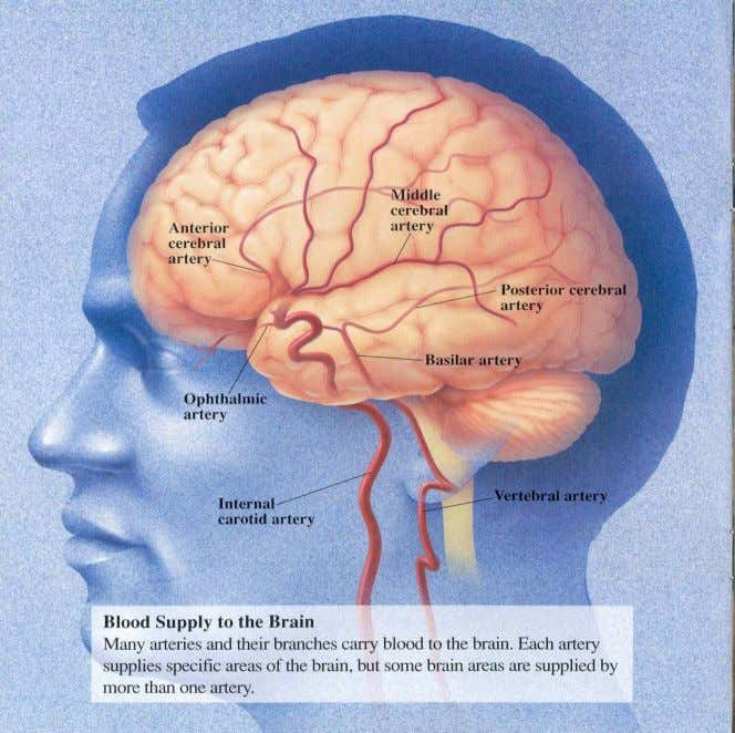 Cerebral Blood Supply – side view 5