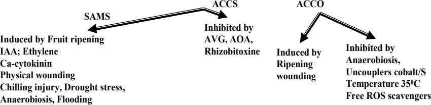 ACCS ACCO SAMS Inhibited by Induced by Fruit ripening IAA; Ethylene Ca-cytokinin Physical wounding Chilling