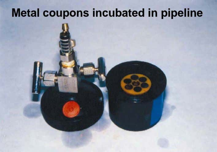 Metal coupons incubated in pipeline
