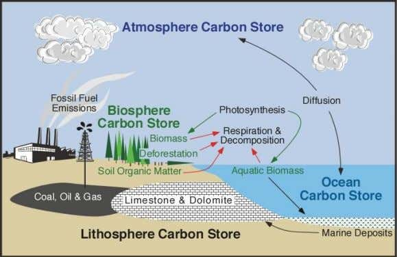 lose energy Limiting nutrient-element that must be added inorder for production to increase Carbon cycle- Nitrogen