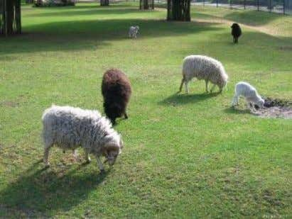 "find non-white sheep as proof that no non-white sheep exist. Figure 5: The statement ""there are"
