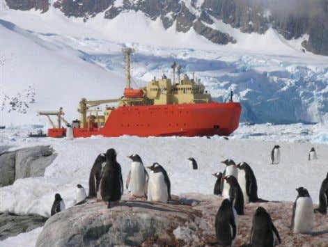 Figure 4: Gentoo penguins watch the Research Vessel Laurence M. Gould in Antarctica. The Gould