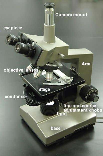 light microscope that is fitted with a digital camera. Figure 4: Compound light microscopes use lenses