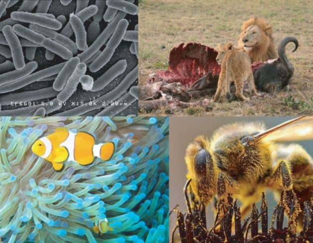 kills and eats another organism, called predation . Figure 5: There are many different types of