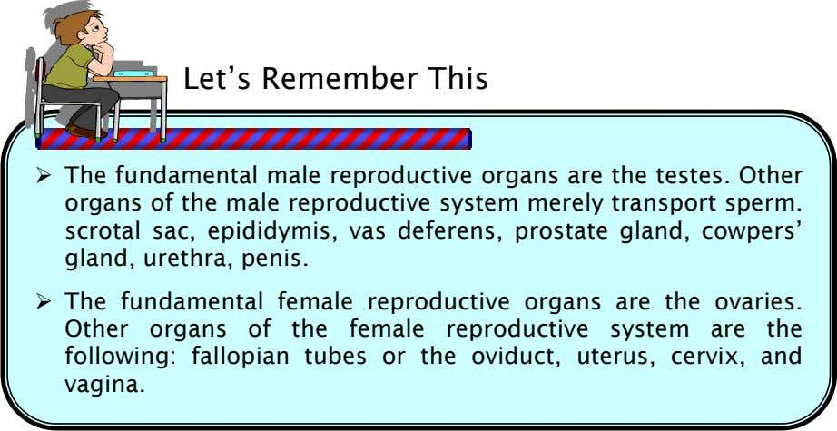 Let's Remember This The fundamental male reproductive organs are the testes. Other organs of the