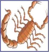 Scorpio VIRUCHIKAM Your sign is aspected by Lords Jupiter Mars and Saturn. The activities could