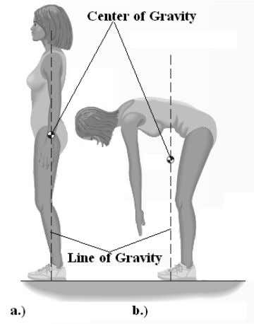the weights of the body segments is equal to zero (Fig. 1). FIGURE 1. Center of